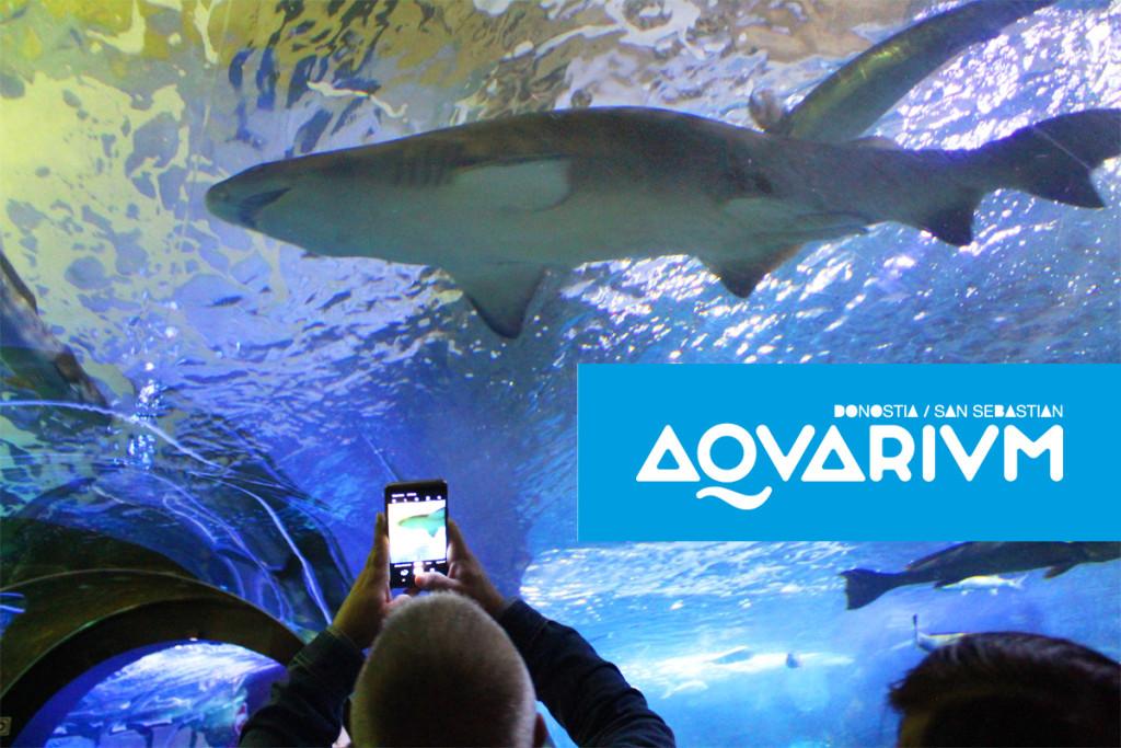 tiburones en el aquarium de san sebastian donostia